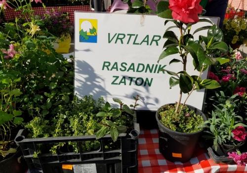 Prodaja sadnica povrća, agruma i cvijeća