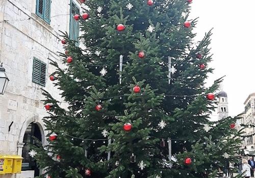 Ponuda božićnih drvca