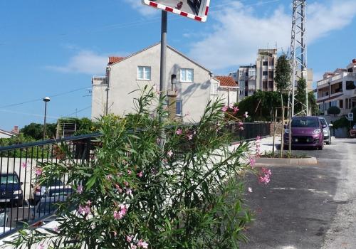 Zavrseno hortikulturno uredenje novih površina u ulici Stjepana Cvijića